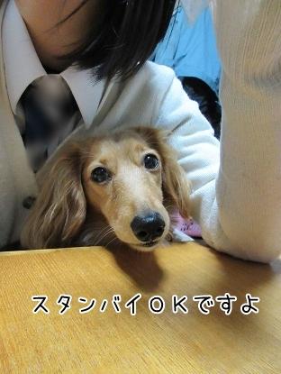 kinako4553.jpg