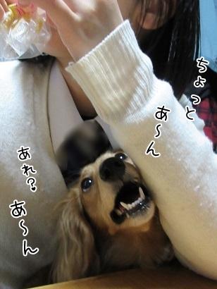 kinako4555.jpg