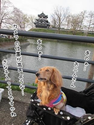 kinako4567.jpg