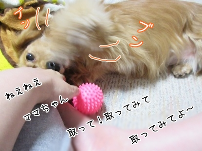 kinako4575.jpg