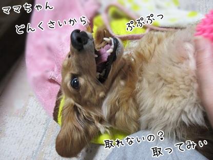kinako4577.jpg