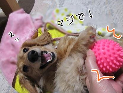 kinako4578.jpg