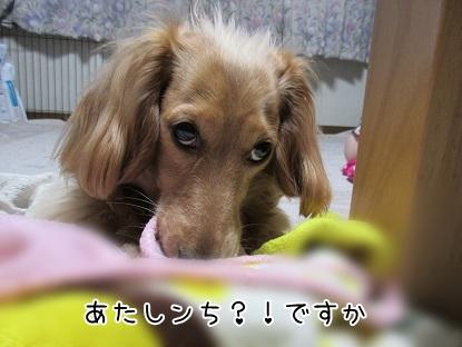 kinako4580.jpg