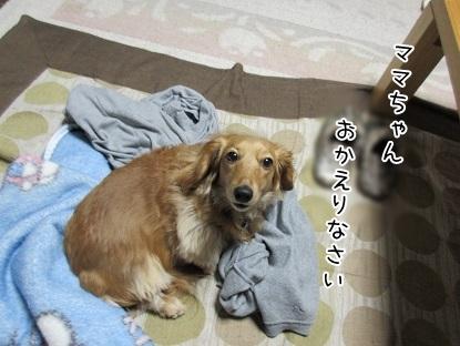kinako4589.jpg