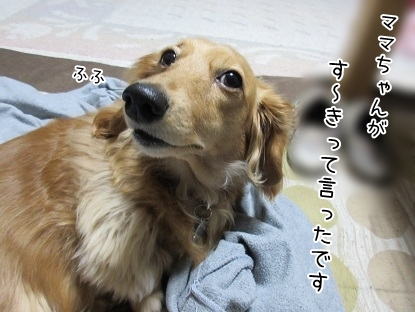 kinako4594.jpg