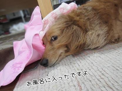 kinako4604.jpg