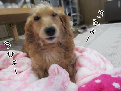 kinako4605.jpg