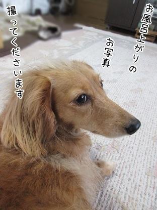 kinako4606.jpg