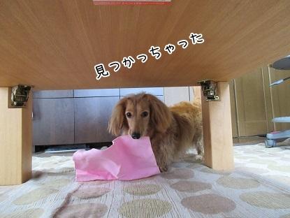 kinako4608.jpg