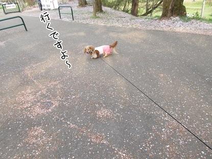 kinako4611.jpg