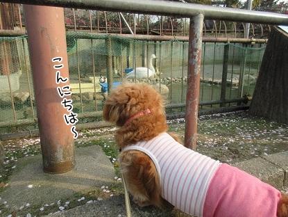 kinako4613.jpg