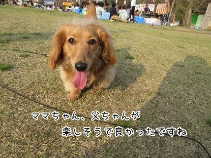 kinako4617.jpg