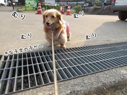 kinako4620.jpg