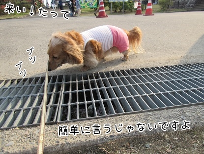 kinako4621.jpg
