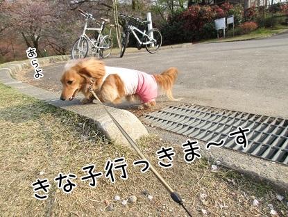 kinako4622.jpg