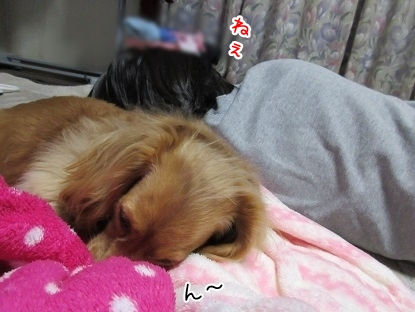 kinako4627.jpg
