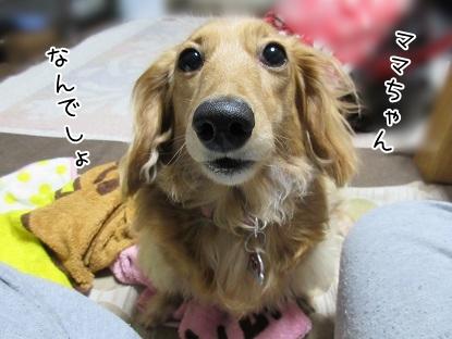 kinako4634.jpg