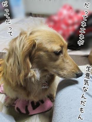 kinako4635.jpg