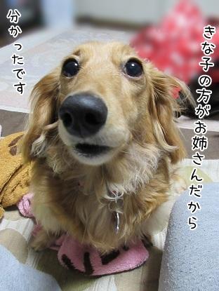 kinako4636.jpg
