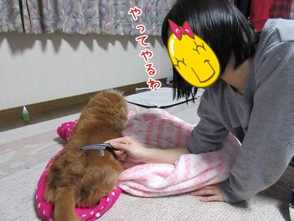kinako4637.jpg