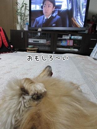 kinako4643.jpg
