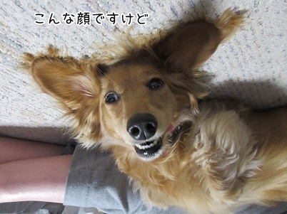 kinako4645.jpg