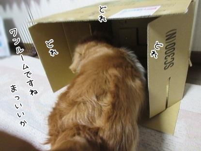 kinako4650.jpg