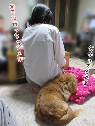 kinako4655.jpg