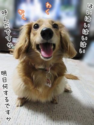 kinako4657.jpg