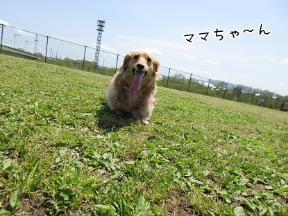 kinako4661.jpg