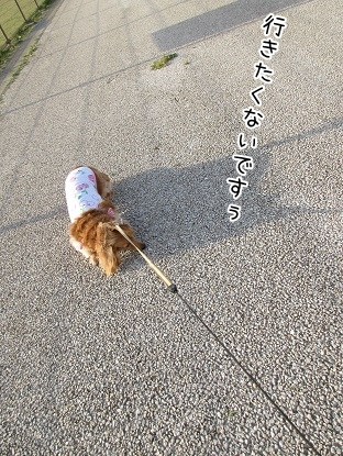 kinako4667.jpg