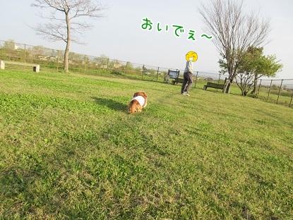 kinako4671.jpg