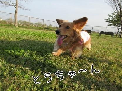 kinako4672.jpg