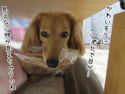 kinako4678.jpg