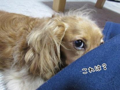 kinako4685.jpg