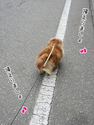 kinako4691.jpg