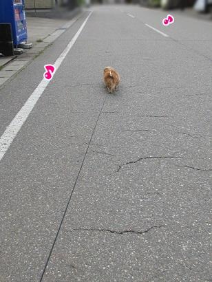 kinako4692.jpg