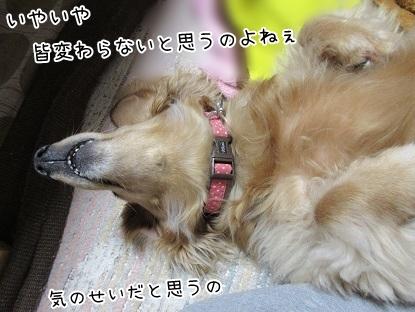 kinako4696.jpg