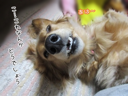 kinako4698.jpg