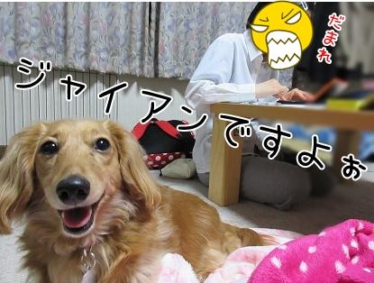 kinako4704.jpg