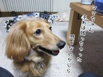 kinako4706.jpg