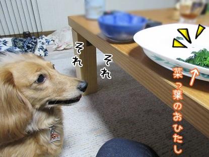 kinako4707.jpg