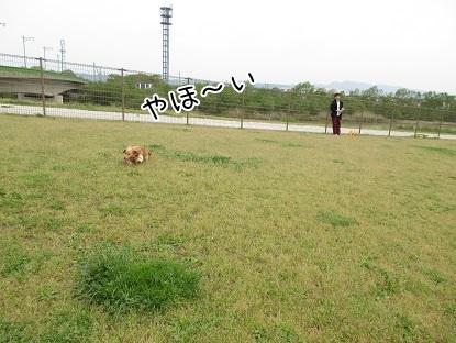kinako4726.jpg