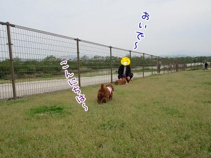 kinako4727.jpg