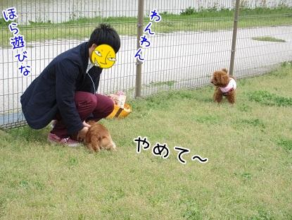 kinako4728.jpg
