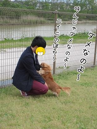 kinako4729.jpg