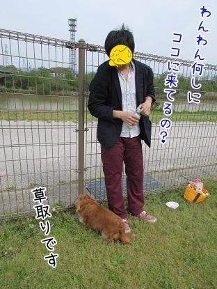 kinako4730.jpg