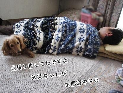 kinako4748.jpg