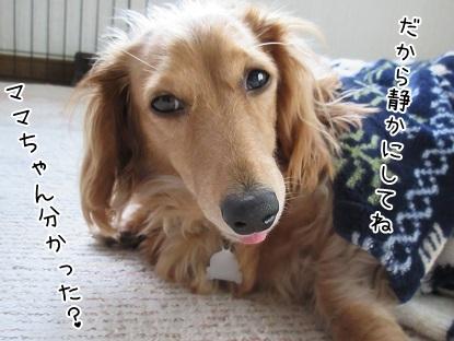 kinako4749.jpg