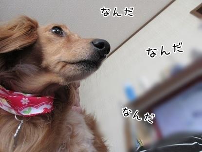 kinako4754.jpg